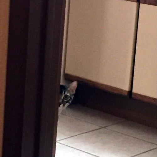 姉の猫に見られてる01