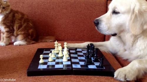 猫がチェスの審判をすると…09