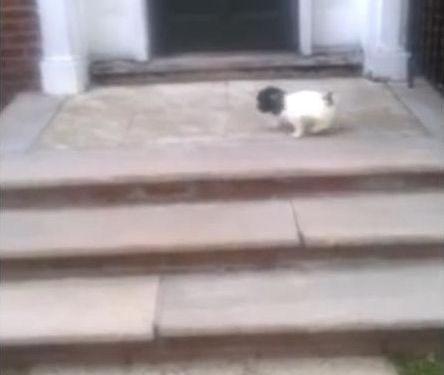 階段が怖い子犬…まさかの方法03