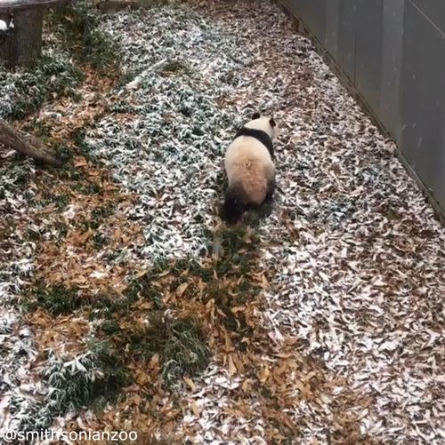 雪遊びパンダ03
