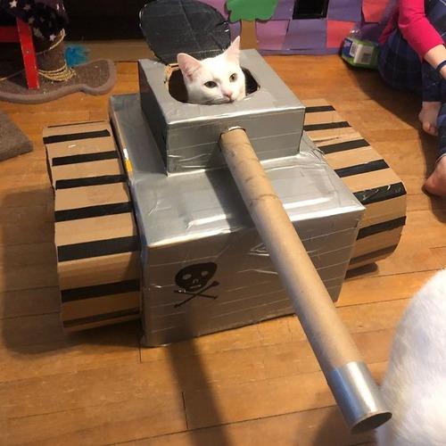 ダンボール猫戦車06
