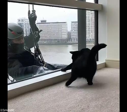 猫と窓掃除人が出会ったら04