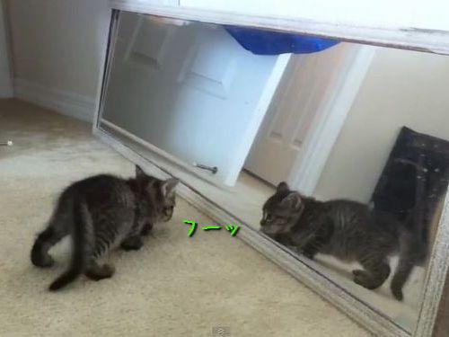 鏡の自分と戦う子猫
