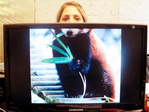 職場で「動物園ごっこ」04