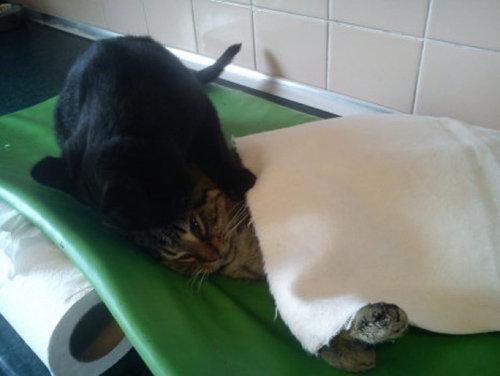 看護猫06