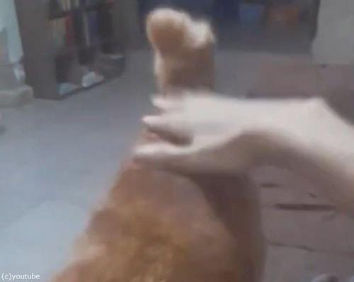 おしりをバシバシ強く叩いてほしい猫03