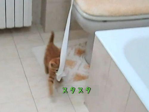 トイレットペーパーを引っ張る子猫00
