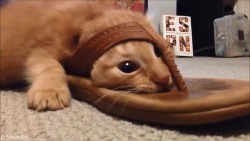 猫+サンダル03