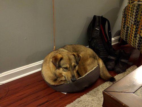 子犬用のベッド02
