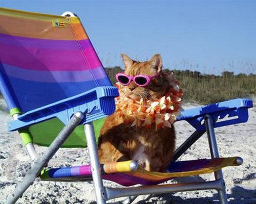 夏を満喫する猫12