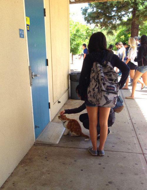 毎日高校に通う猫07