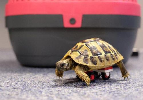 歩けない亀にレゴの補助輪04