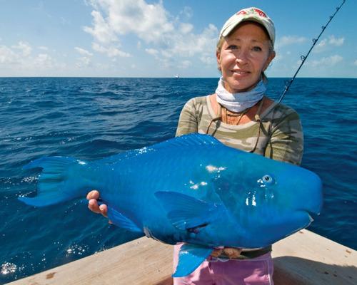 青い魚01