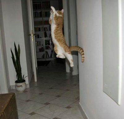 猫ジャンプ13