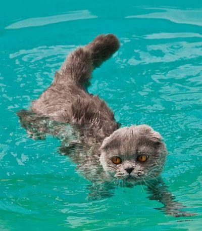 泳ぐ猫03