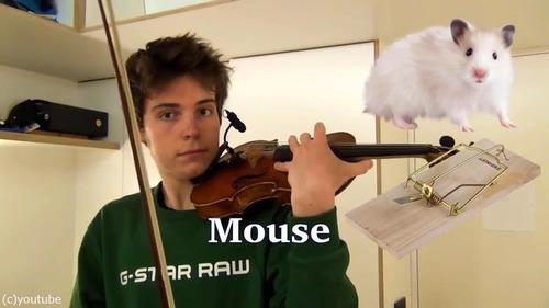 ヴァイオリニストが動物の鳴き声を演奏する03