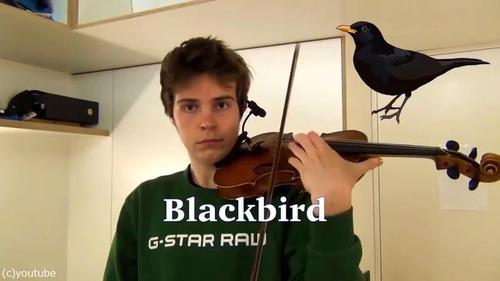 ヴァイオリニストが動物の鳴き声を演奏する09