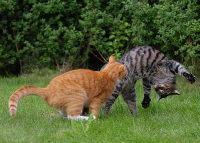 壮絶なる2匹の猫08
