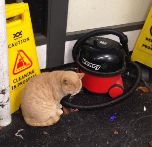 スーパーマーケットに住みついた猫03