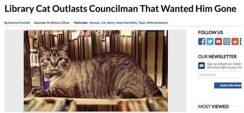 図書館猫の成り行き03