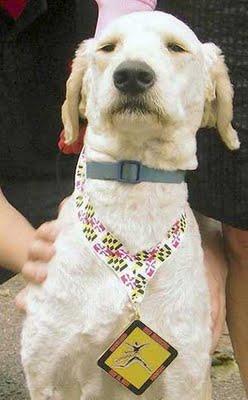 ハーフマラソン犬01