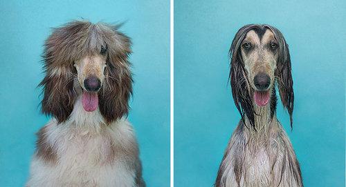 入浴前と後のペットのビフォー・アフター09