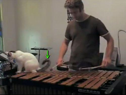 木琴の邪魔をする猫00