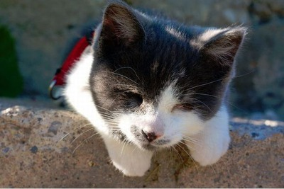 盲目の猫09