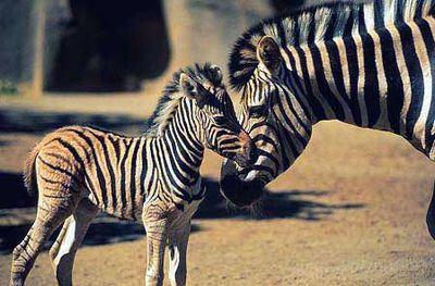 親子愛であふれる動物たち05