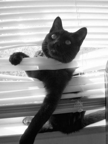 ノートに描かれた猫02