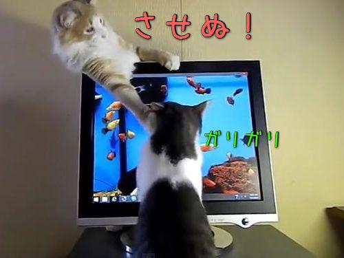 猫のモニタ画面・攻防戦00