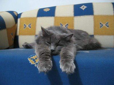 よく寝る動物TOP
