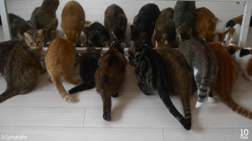 猫10匹と大きな鏡09