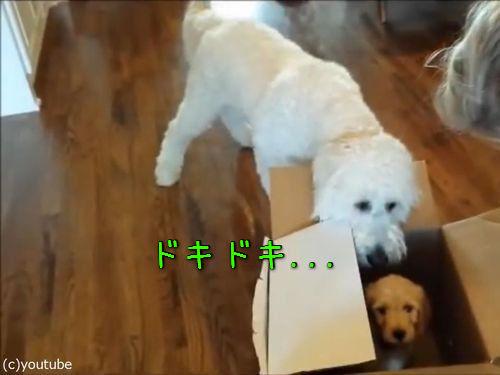 「犬の誕生日に、子犬をプレゼントした…」00