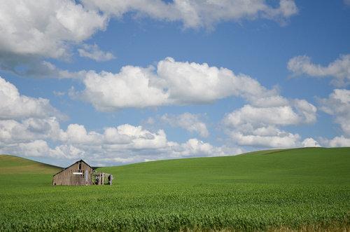Windows XPの景色02