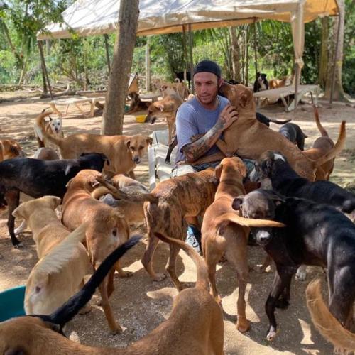 ハリケーンで300匹の犬を自宅で保護07