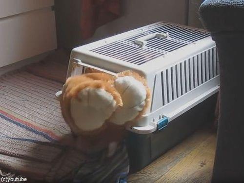 クマのぬいぐるみと一緒じゃないと昼寝をしない犬10