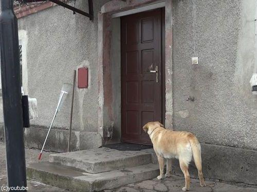 家に入りたい犬06