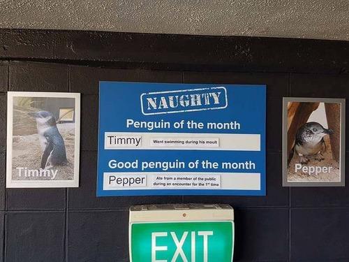 ニュージーランド国立水族館01
