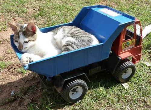 猫と乗り物02