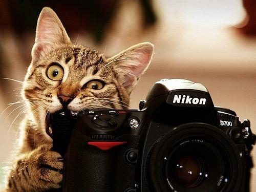 カメラマンってすごい00