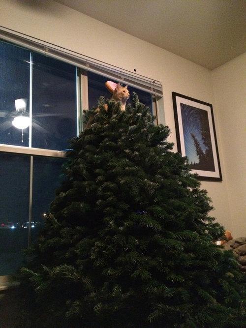 クリスマスツリーを立てた10分後01
