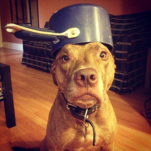 忍耐強い犬16