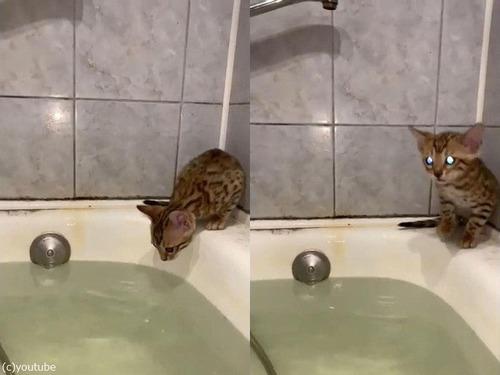 バスタブの奥で子猫が「助けてー」01
