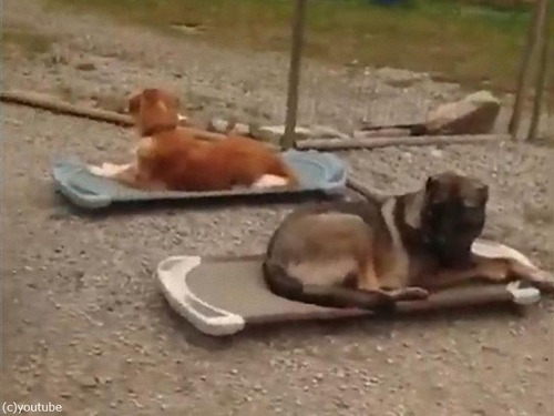 犬のデイケアでリラックス02