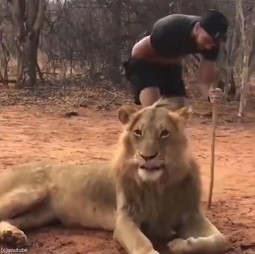 ライオンのクシャミ05