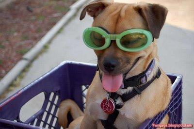 メガネ犬10