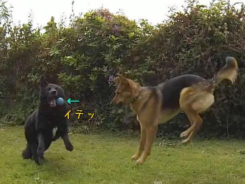 運動神経の悪い犬たち00