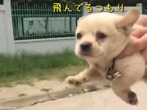 空飛ぶ子犬00