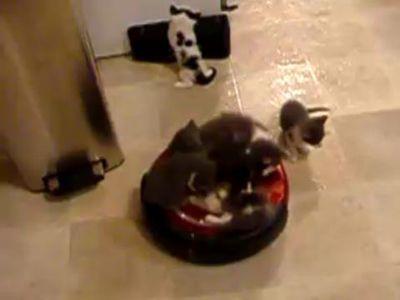 自動掃除機の上に乗る子猫たち